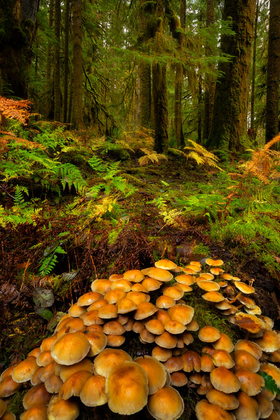 Mushroom  Rendezvous