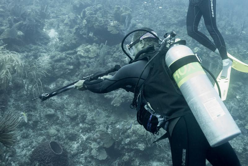 Scuba diver with harpoon gun, Secret Spot, Turneffe Atoll, Belize Barrier Reef, Belize
