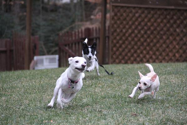 Puppy Play Date - Meet Figgy