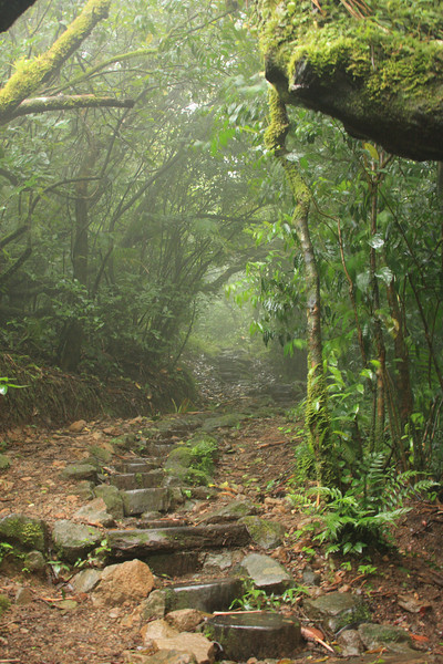 The trail through the cloud forest at the top of Mombacho
