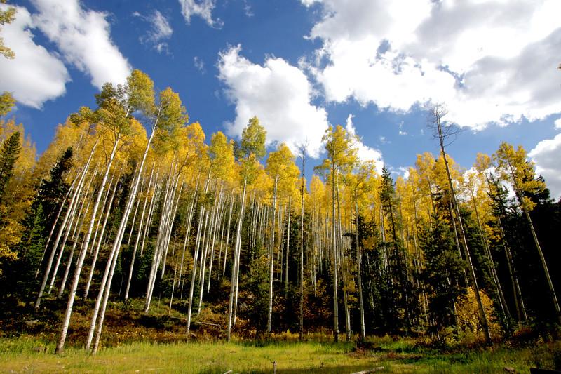 TR-COL-trees_5246-0050