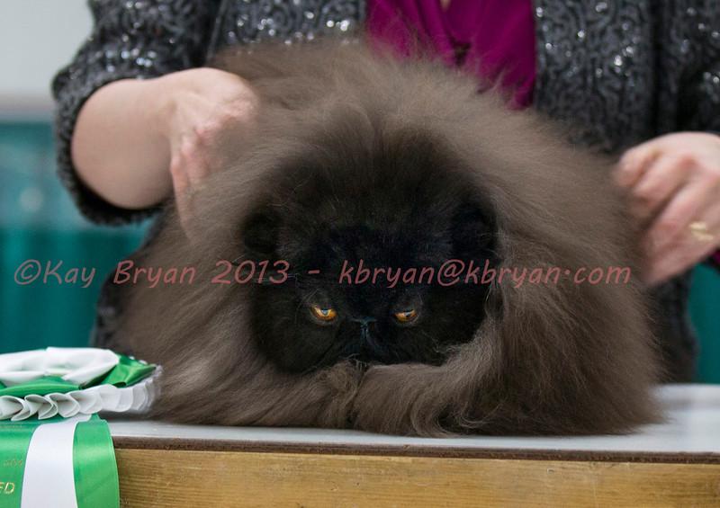 CatShow2014127.jpg