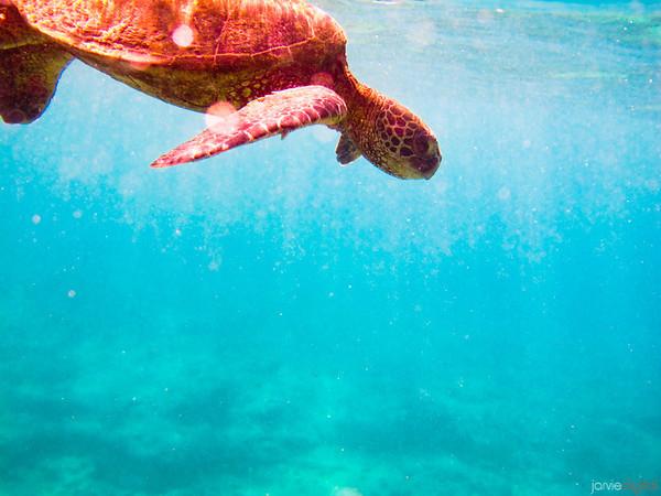 Hawaii - Best of Best
