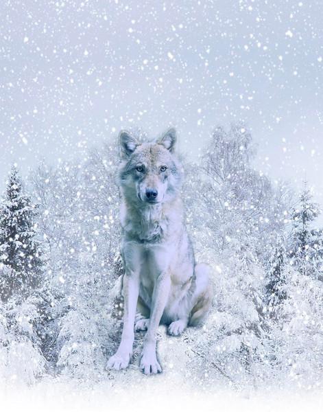 Dog2HR.jpg