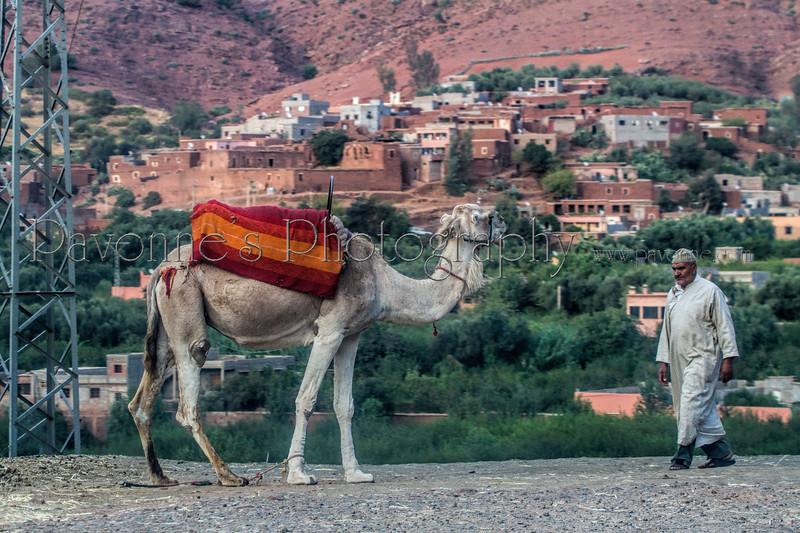 Morocco3 2777.jpg