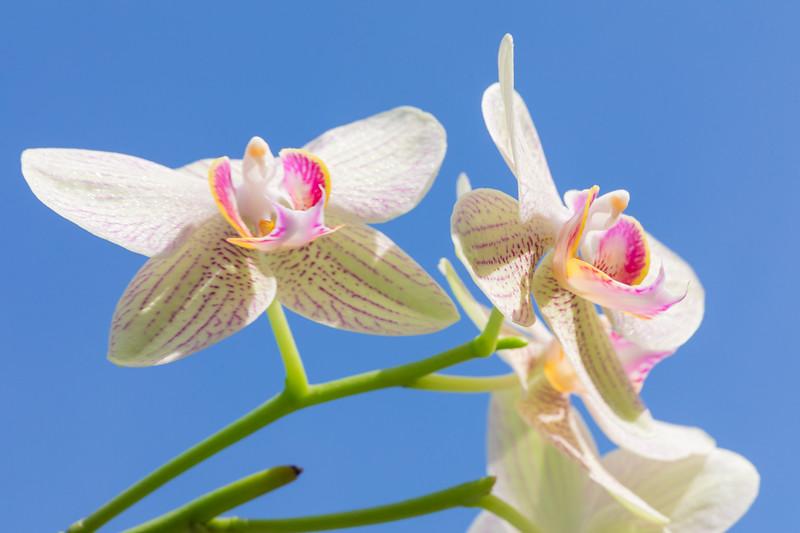 FineArt_Flowers_051520_0498.jpg
