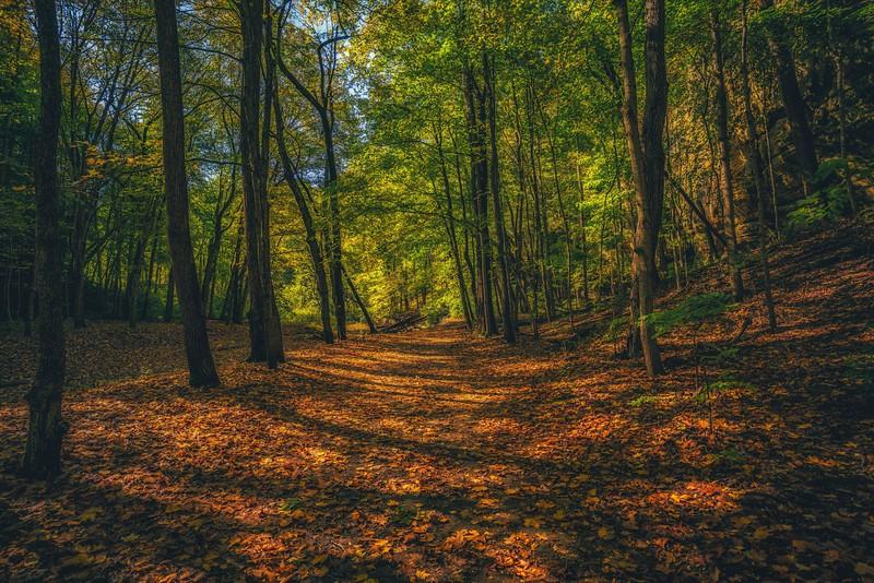 fall- (1 of 1).jpg