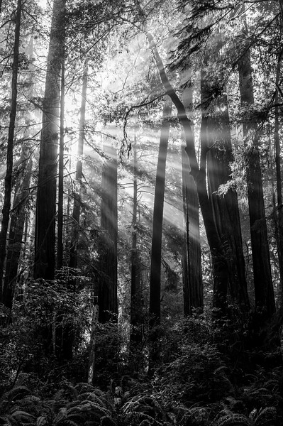 20101108 Redwoods National Park 089.jpg