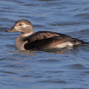 2020-12-04 Riverlands Migratory Bird Sanctuary