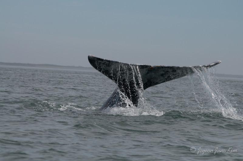 Mexico-Loreto-Whale-2407.jpg