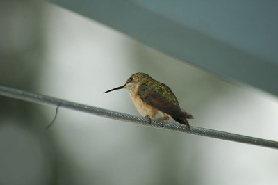 2005.07.03-Humming.Birds