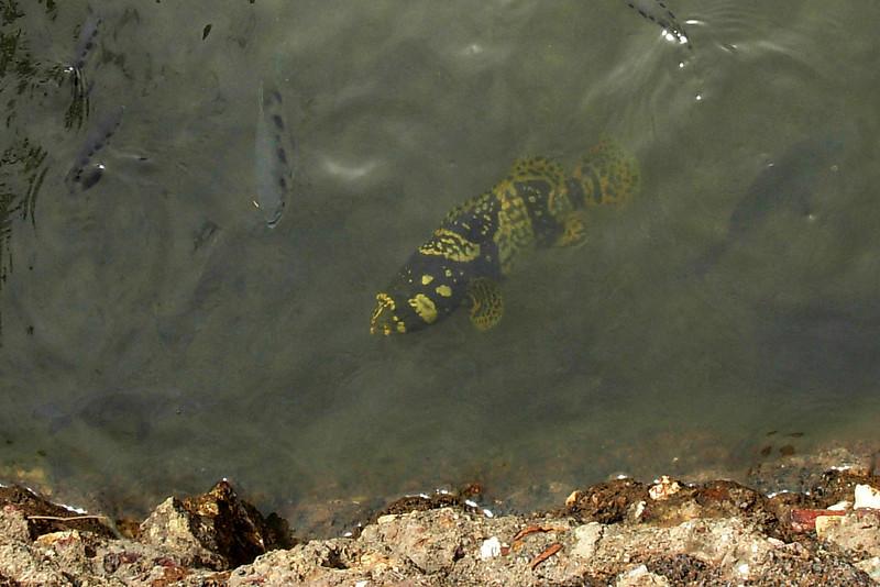 Y-B Unidentified Fish.jpg