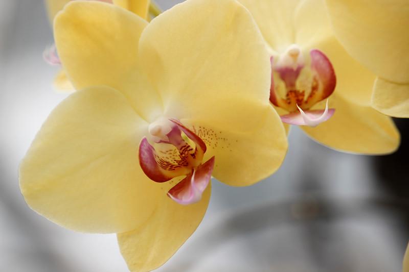 KoRedfield-Floral49.jpg