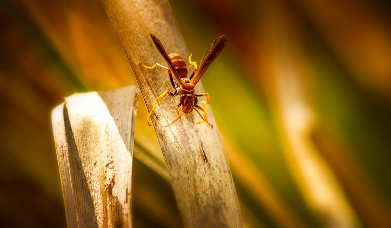 Bugs and Beetles - 146.jpg