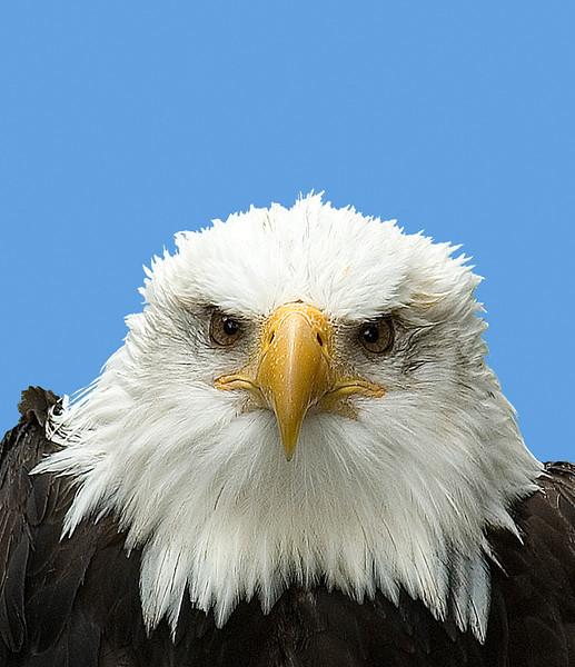 AK_Eagles-6.jpg