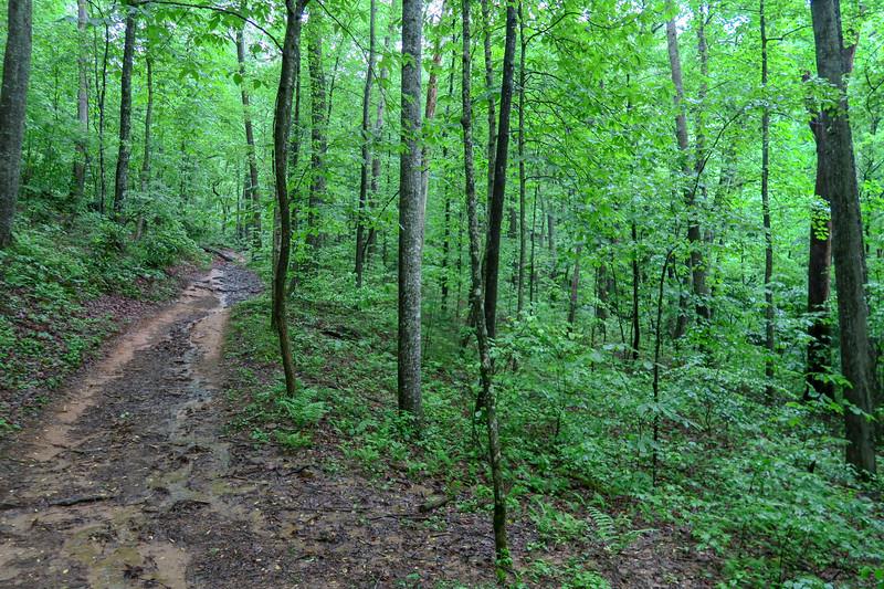 Lower Sidehill Trail -- 2,430'