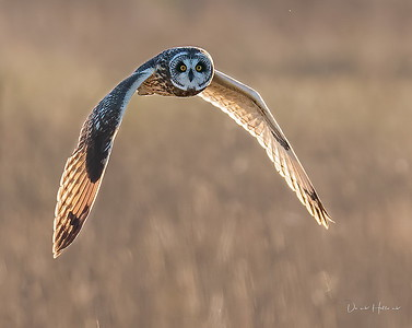 Short-eared Owl, Prairie Chicken and much more