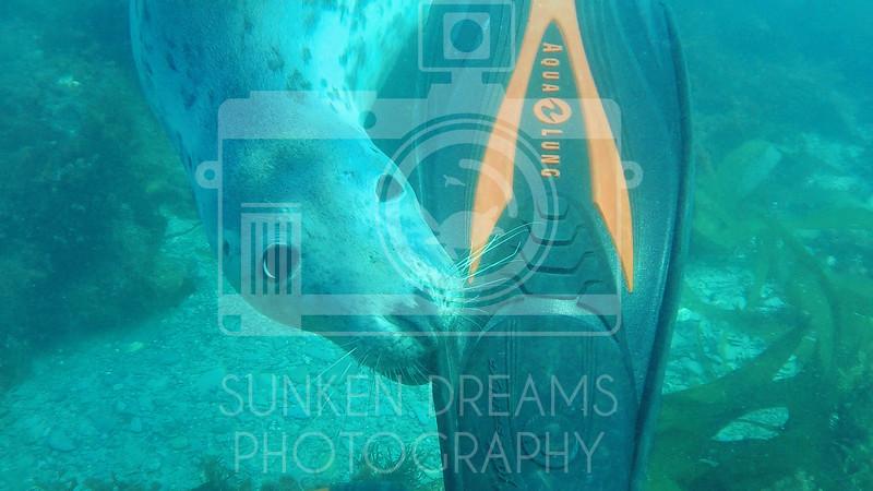 Lundy Island Edit.Still082.jpg