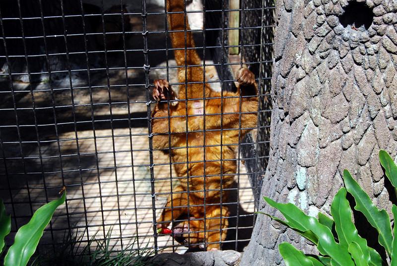 2014 Zoo in Sanford, Florida (16).JPG