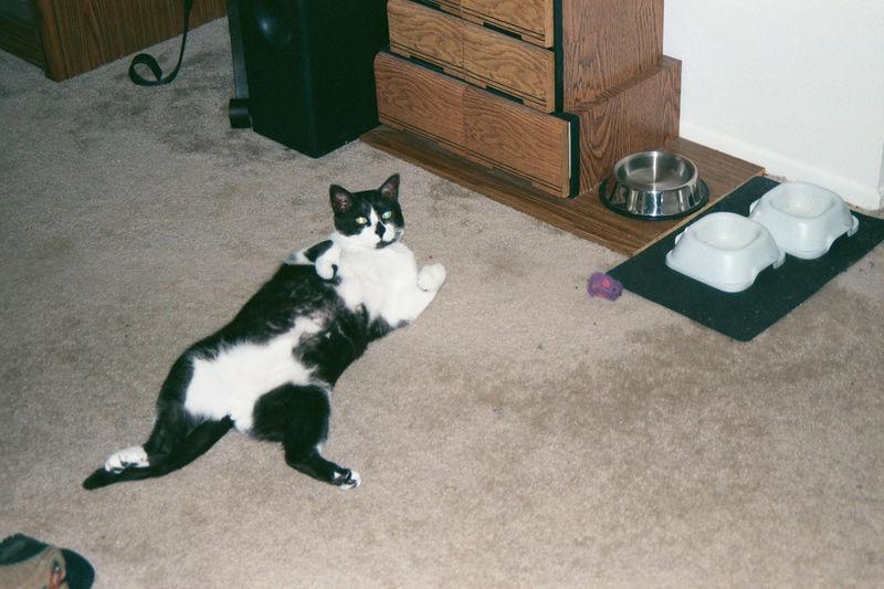 2001 08b - Cats at old apt 34.JPG