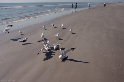 Paul's Fourth Year -- Feeding gulls at The Dunes