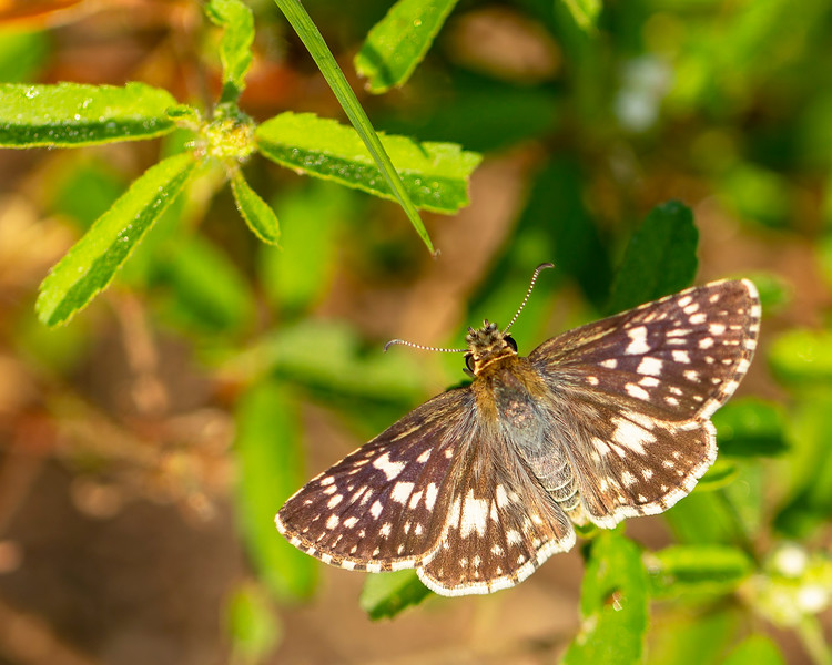 #5 Brown Butterfly