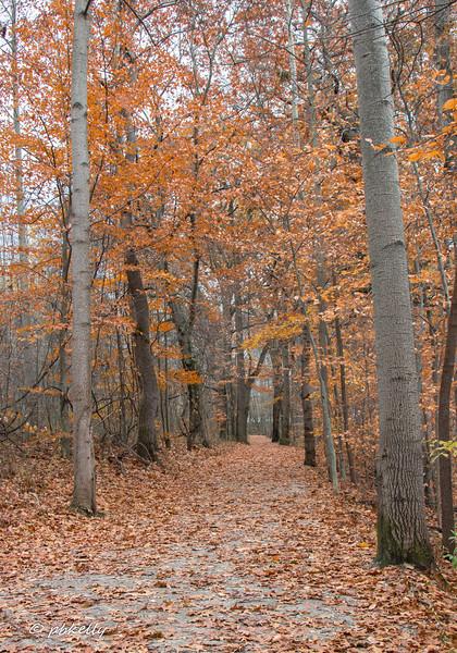 fall scene 111917-6.jpg