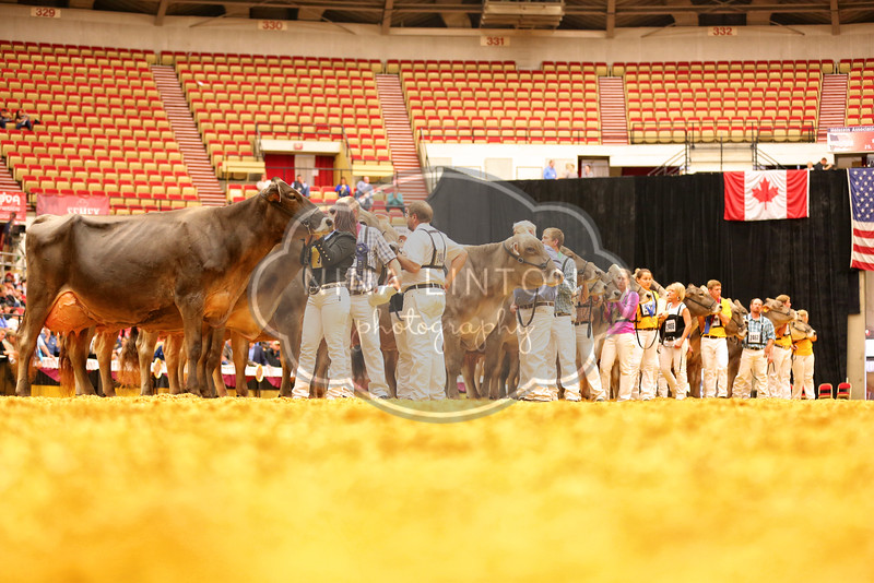 World Dairy Expo Brown Swiss Show 2016