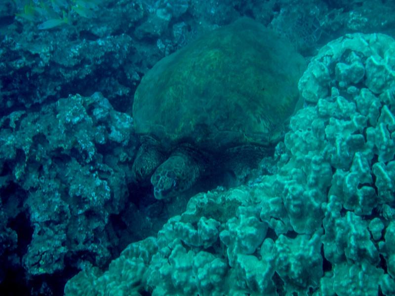 Hawaii diving - 048.jpg