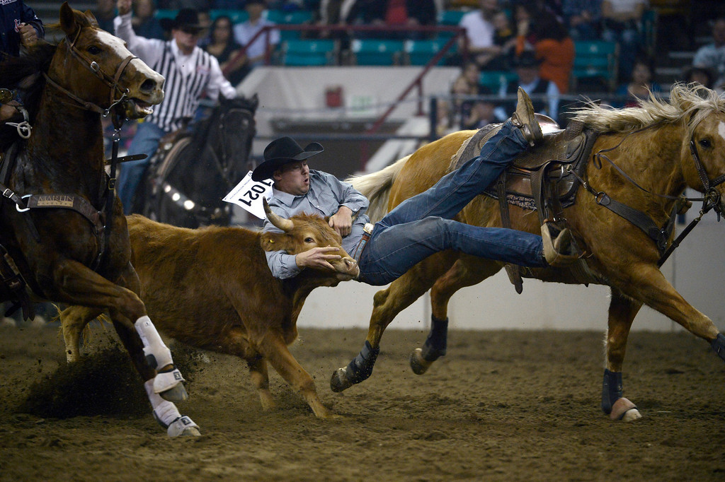 . DENVER, CO- JANUARY 27:   Jake Rinehart, of Highmore, South Dakota, takes down a steer during the steer wrestling event.  The final day of the 2013 National Western Stock show was Sunday, January 27th.  One of the big events for the day was the PRCA Pro Rodeo finals in the Coliseum.  The event featured bareback riding, steer wrestling, team roping, saddle bronc riding, tie down roping, barrel racing and bull riding.  (Photo By Helen H. Richardson/ The Denver Post)