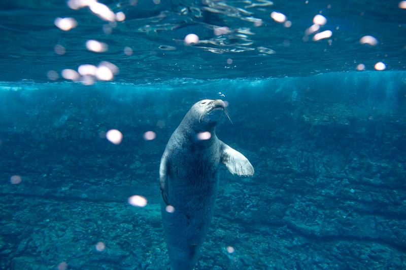 monk seals-5.jpg