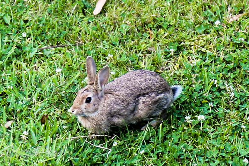 Rabbit in a crouch