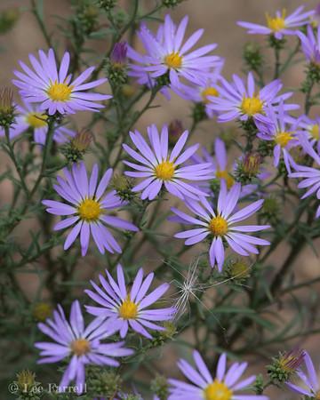Chatfield Flora