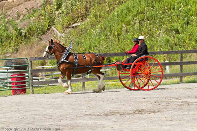 Bradford County Roundup Draft Horse Driving