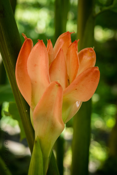 PLANT - Ginger-0997.jpg