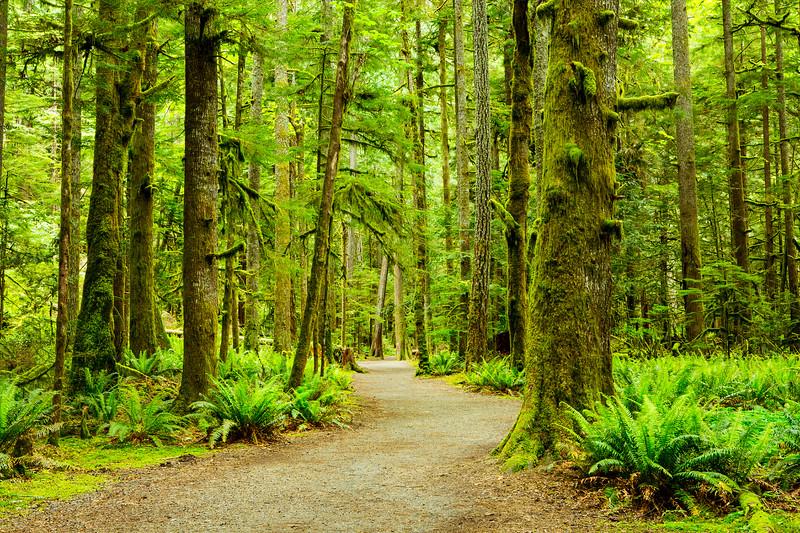lush green rain forest.