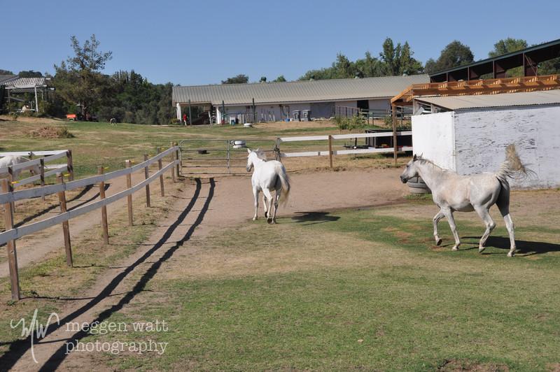 EB&Horses-091.jpg