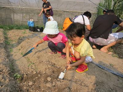 種粟米@川上農莊(2012年9月30日)