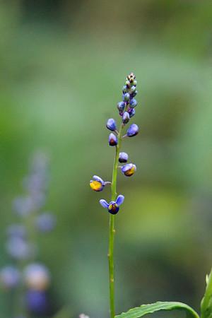 Flowers of El Silencio Lodge
