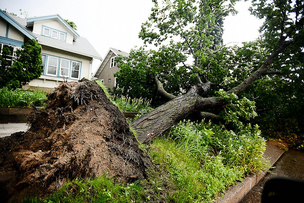 . A large tree fell on the boulevard on Portland Avenue in Minneapolis. (Pioneer Press: Ben Garvin)