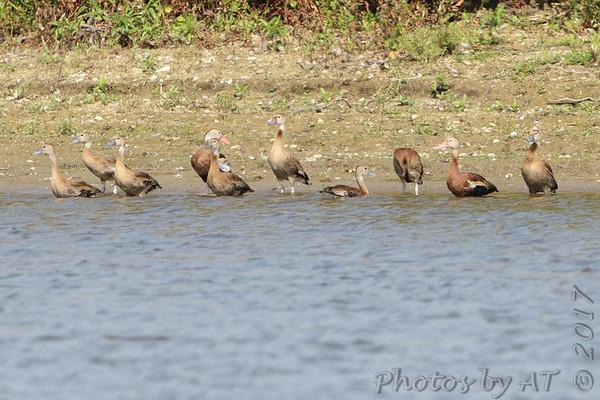 2017-09-26 Riverlands Migratory Bird Sanctuary