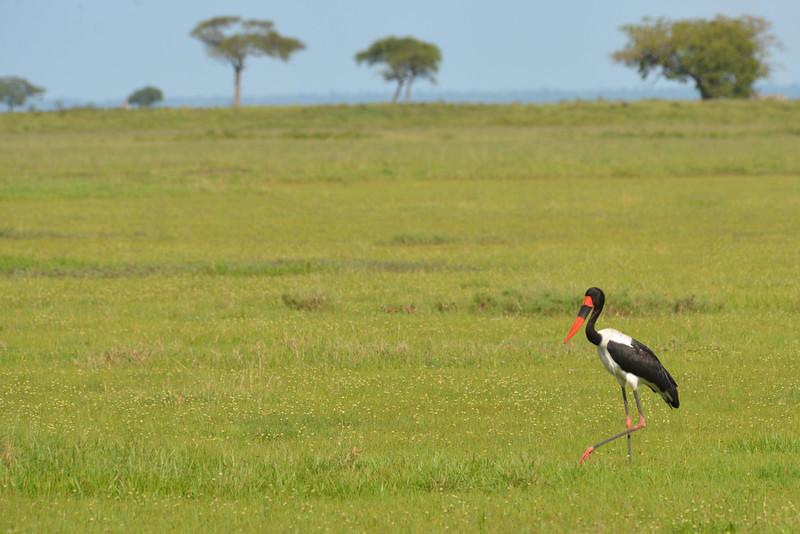 East Africa Safari 256.jpg