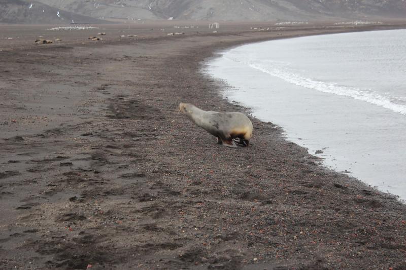 Antarctica 054.JPG