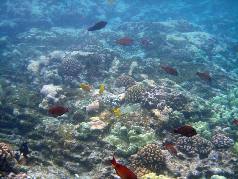 493- 20080416- Hawaii 20-Snorkelling IMG_0720.jpg