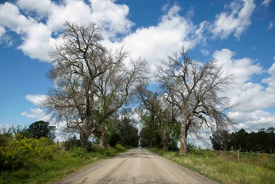 2019-08-29 Nations Road Trees