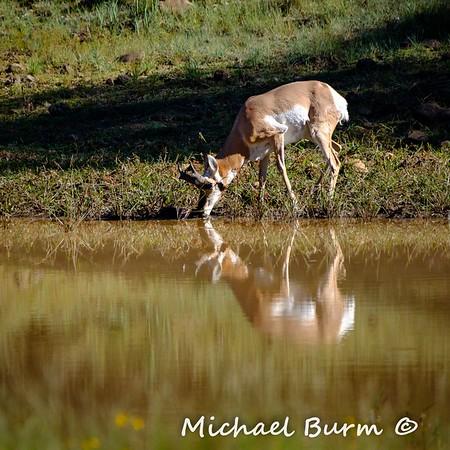 6A Elk Hunt 2018