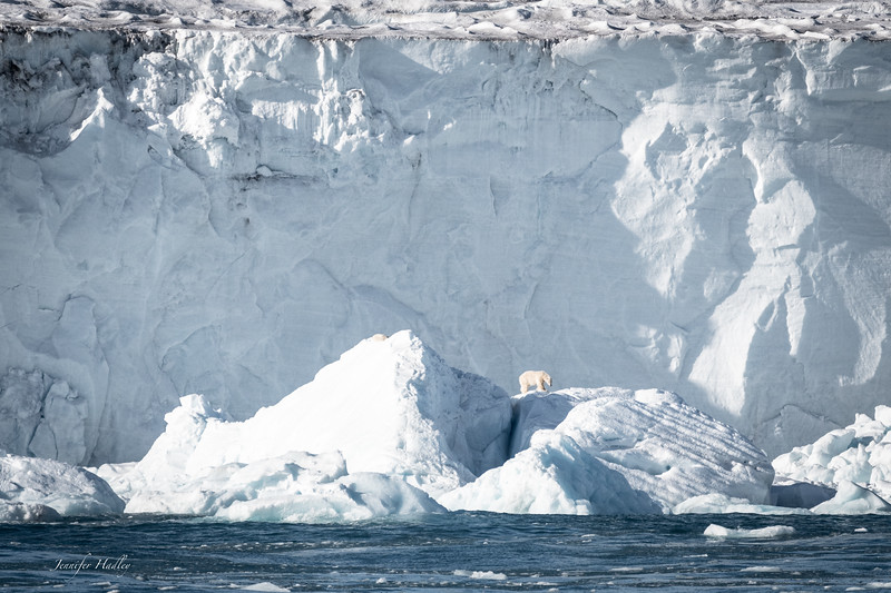 polar bear against iceberg.jpg