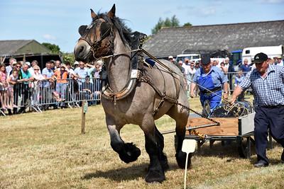 Paardentrekwedstrijd Eede 2017