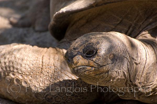 Southwick's Zoo - Mendon MA