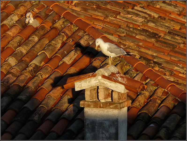 2008-08-Venezia-1537.jpg